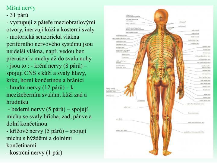 Míšní nervy