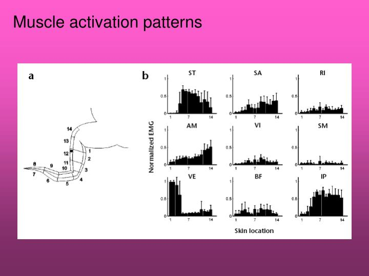 Muscle activation patterns