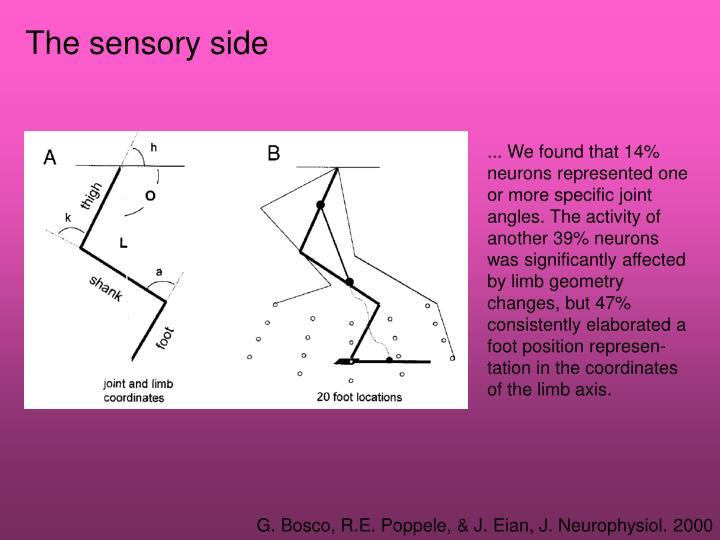 The sensory side