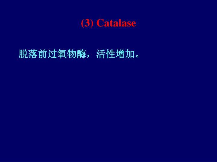 (3) Catalase