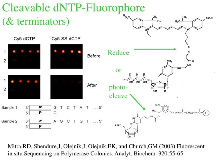 Cleavable dNTP-Fluorophore