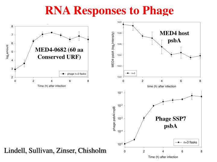 RNA Responses to Phage