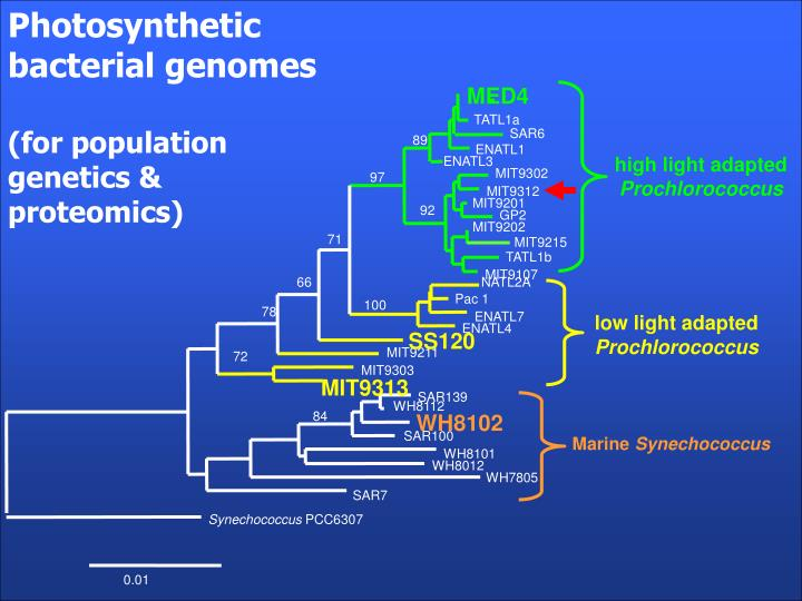 Photosynthetic bacterial genomes