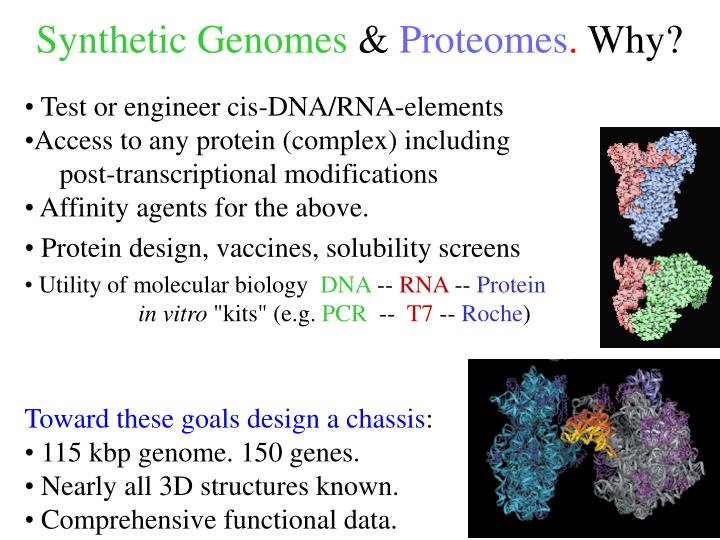 Synthetic Genomes