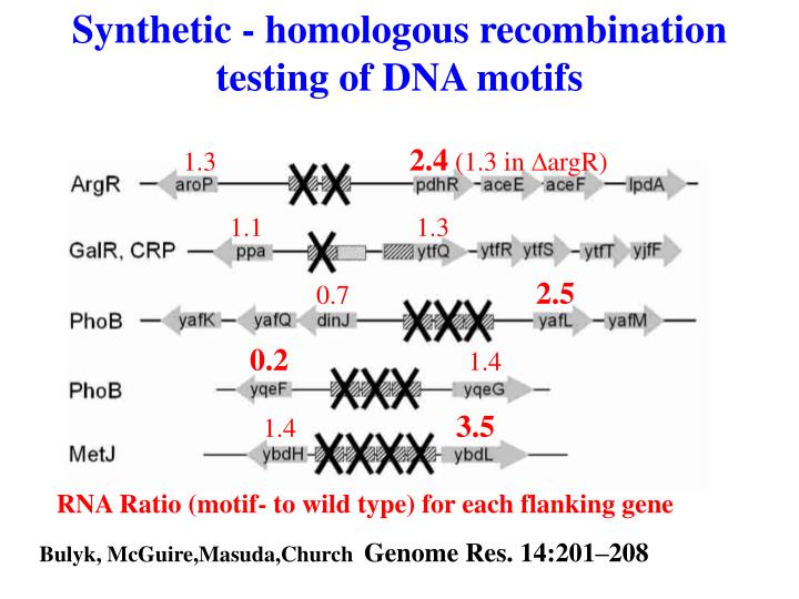 Synthetic - homologous recombination