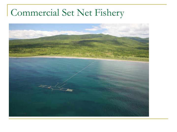 Commercial Set Net Fishery