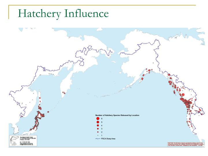 Hatchery Influence