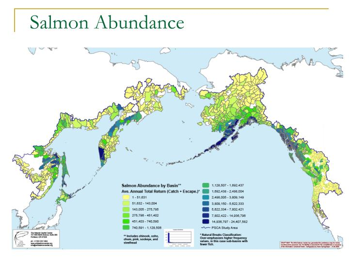 Salmon Abundance