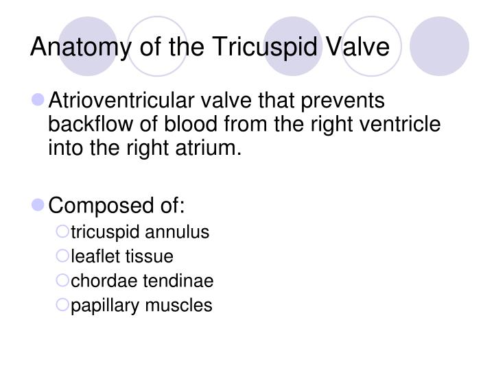 Anatomy of the Tricuspid Valve