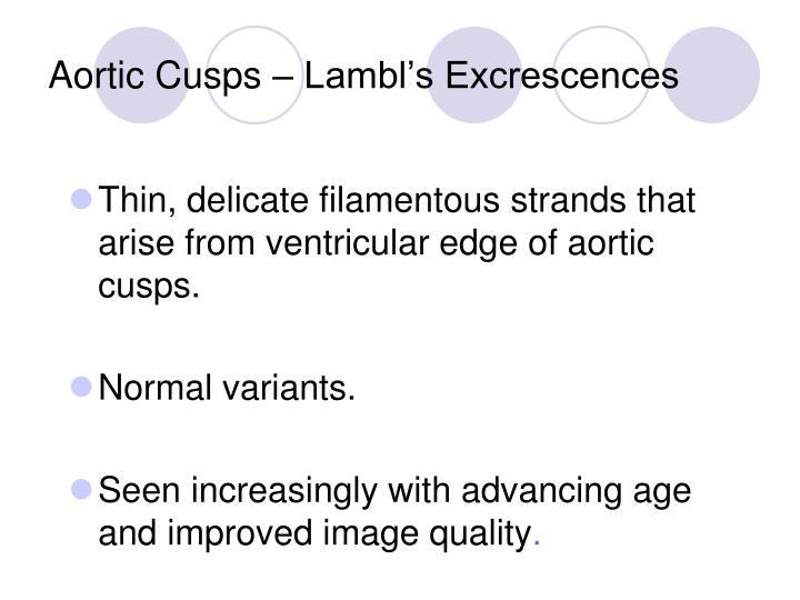 Aortic Cusps – Lambl's Excrescences