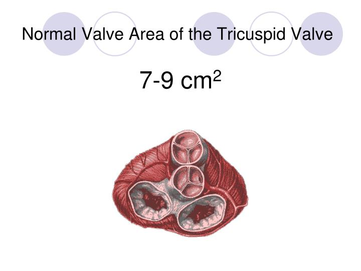 Normal Valve Area of the Tricuspid Valve