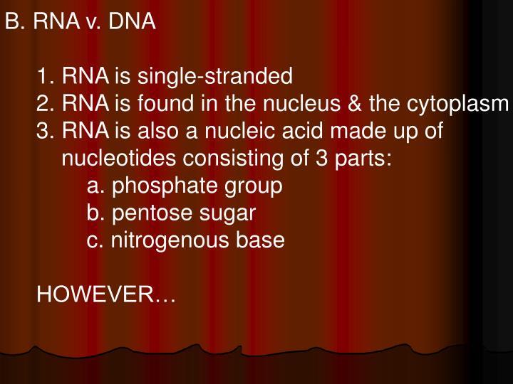 B. RNA v. DNA