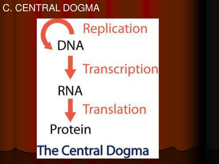 C. CENTRAL DOGMA