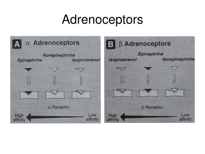 Adrenoceptors
