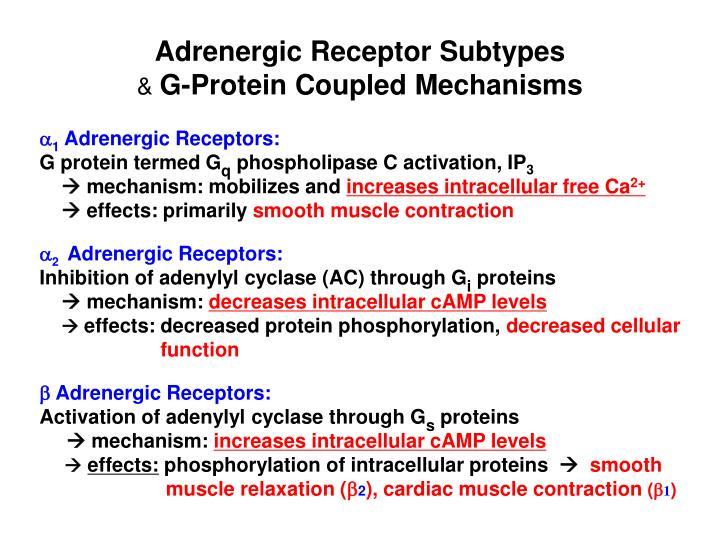 Adrenergic Receptor Subtypes