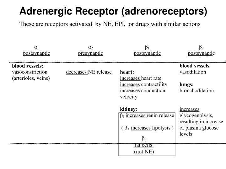 Adrenergic Receptor (adrenoreceptors)