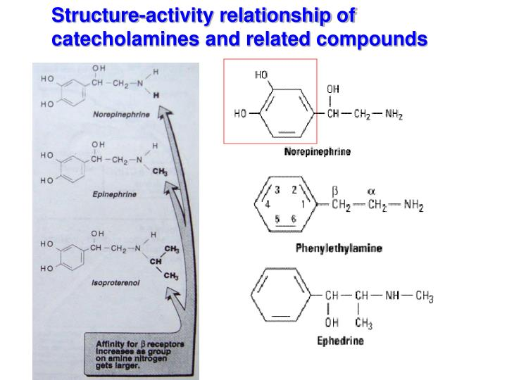 Structure-activity relationship of