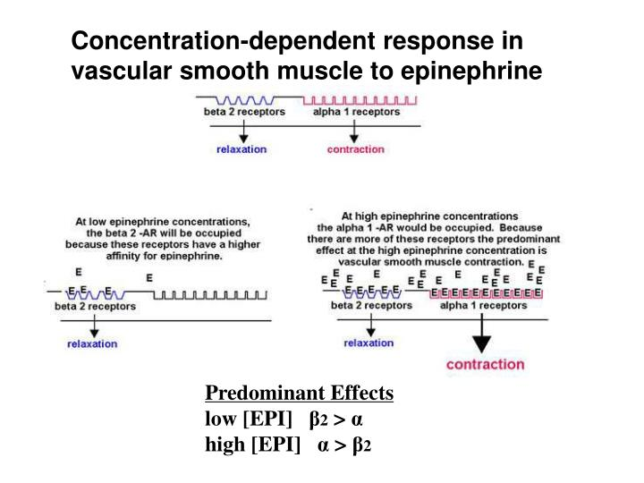 Concentration-dependent response in vascular smooth muscle to epinephrine