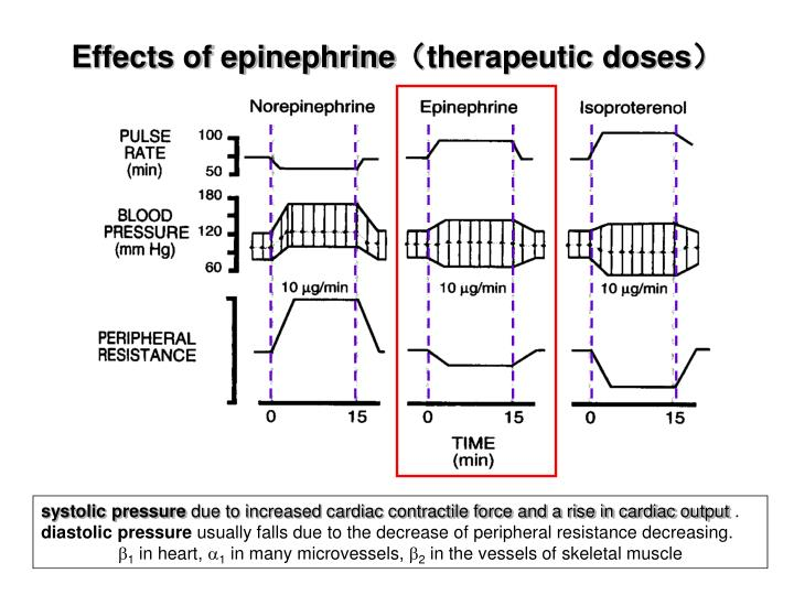 Effects of epinephrine