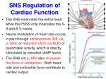 sns regulation of cardiac function