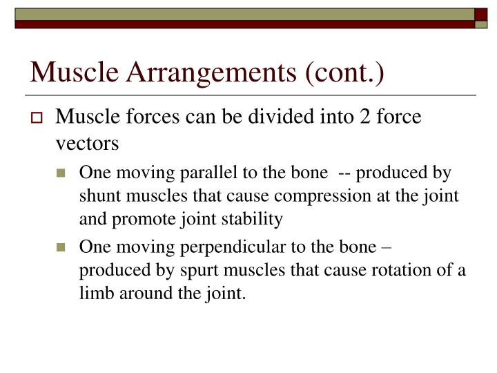 Muscle Arrangements (cont.)
