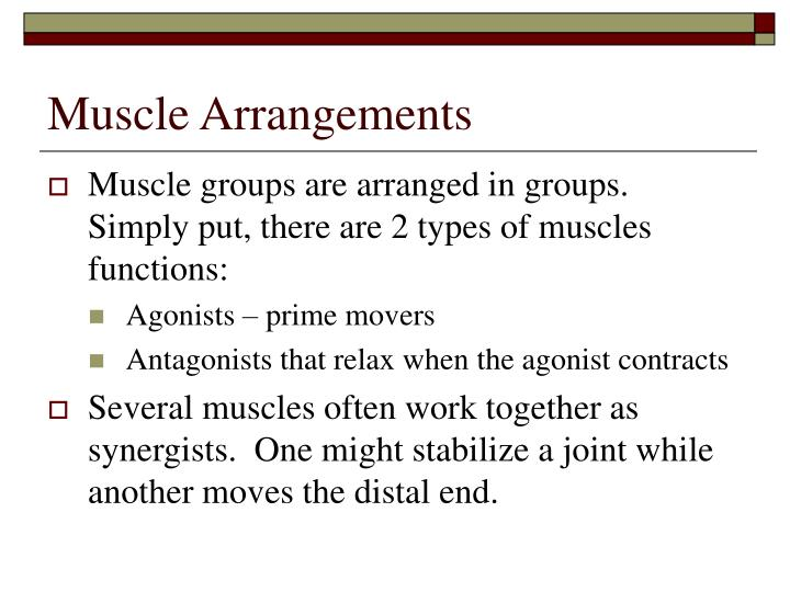 Muscle Arrangements