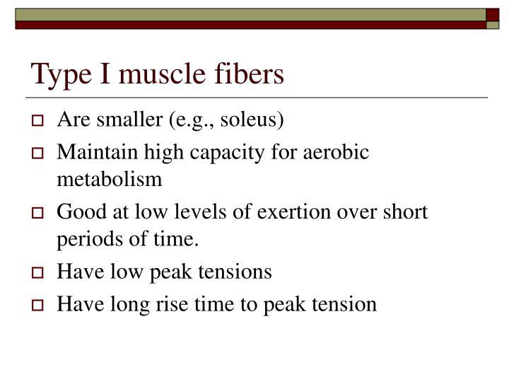 Type I muscle fibers