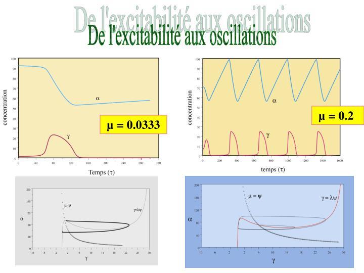De l'excitabilité aux oscillations