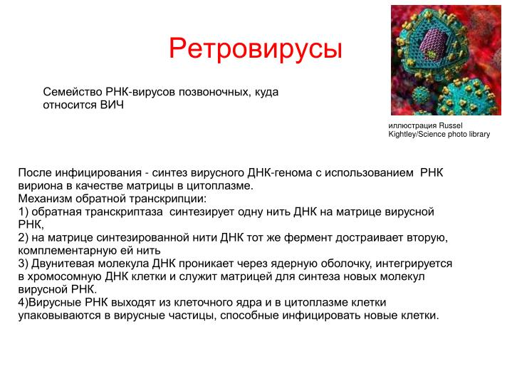 Ретровирусы
