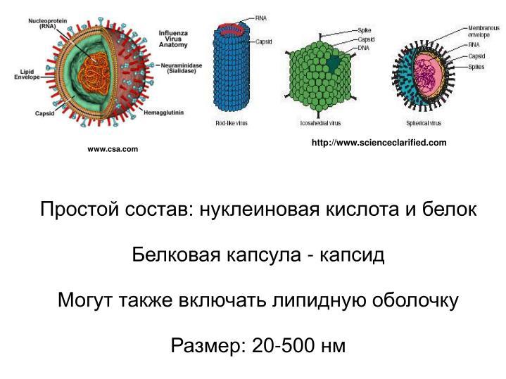 http://www.scienceclarified.com