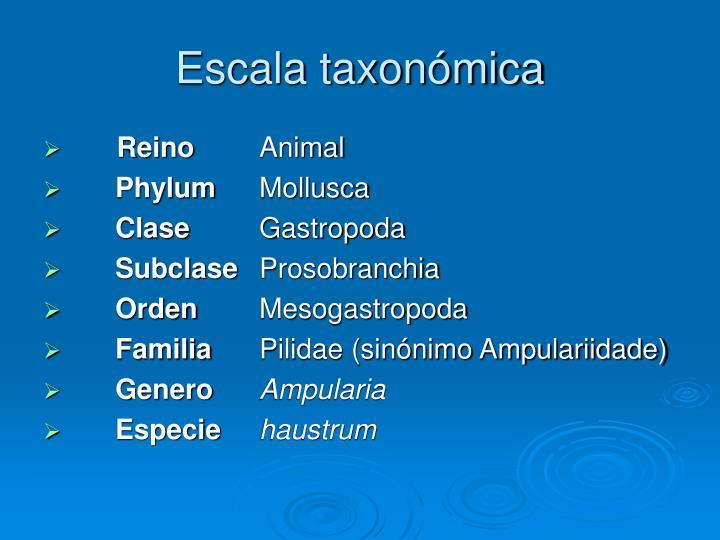 Escala taxonómica