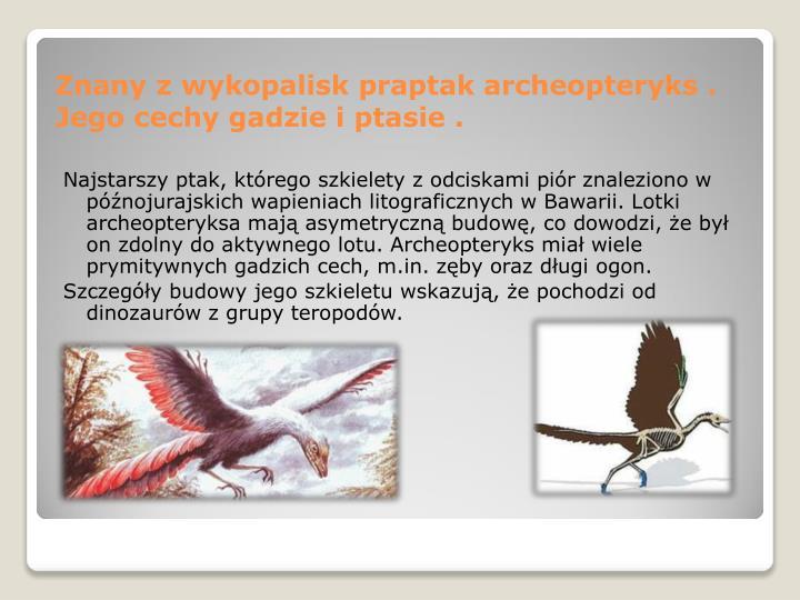 Najstarszy ptak, którego szkielety z odciskami piór znaleziono w  późnojurajskich wapieniach litograficznych w Bawarii. Lotki archeopteryksa mają asymetryczną budowę, co dowodzi, że był on zdolny do aktywnego lotu. Archeopteryks miał wiele prymitywnych gadzich cech, m.in. zęby oraz długi ogon.