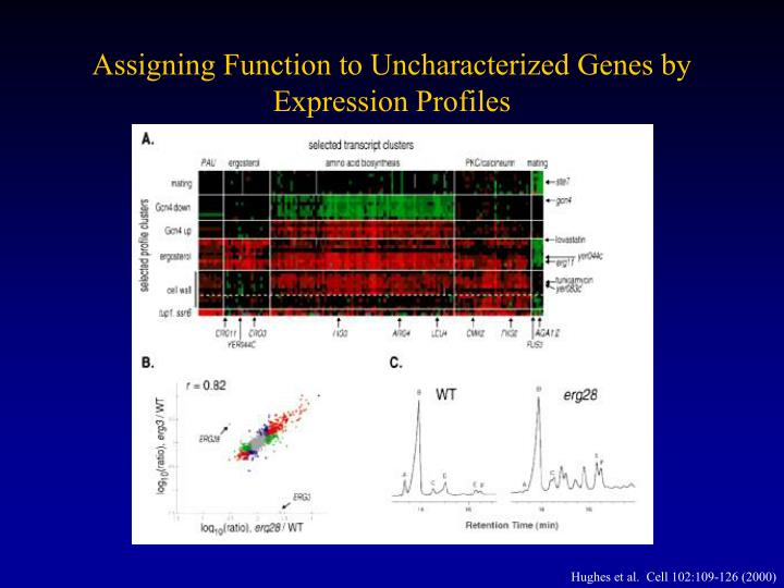 Assigning Function to Uncharacterized Genes by Expression Profiles
