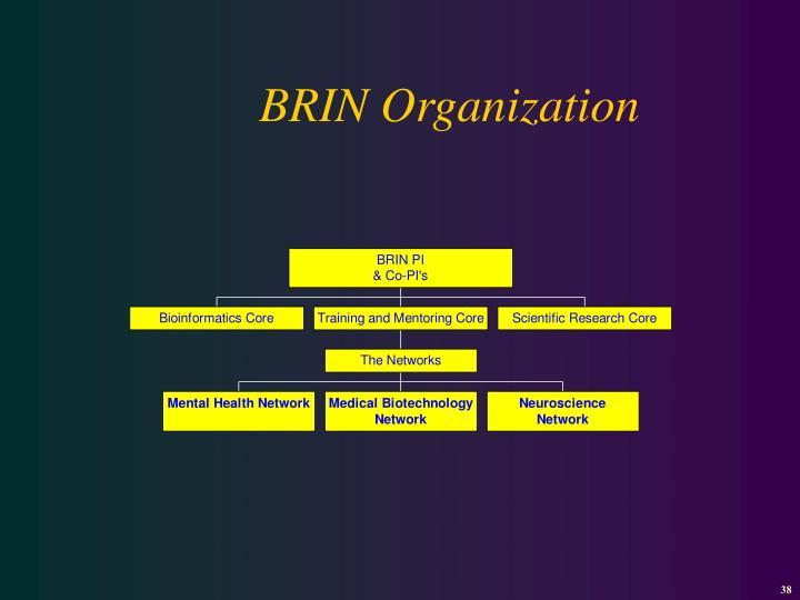 BRIN Organization
