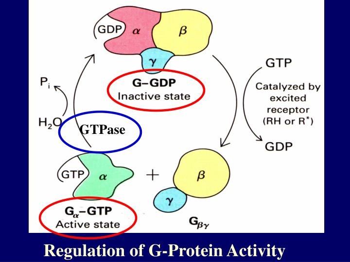 GTPase