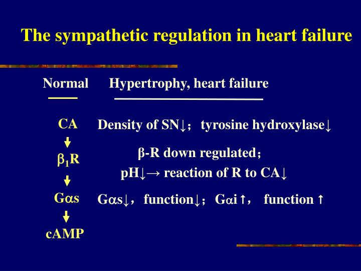 The sympathetic regulation in heart failure