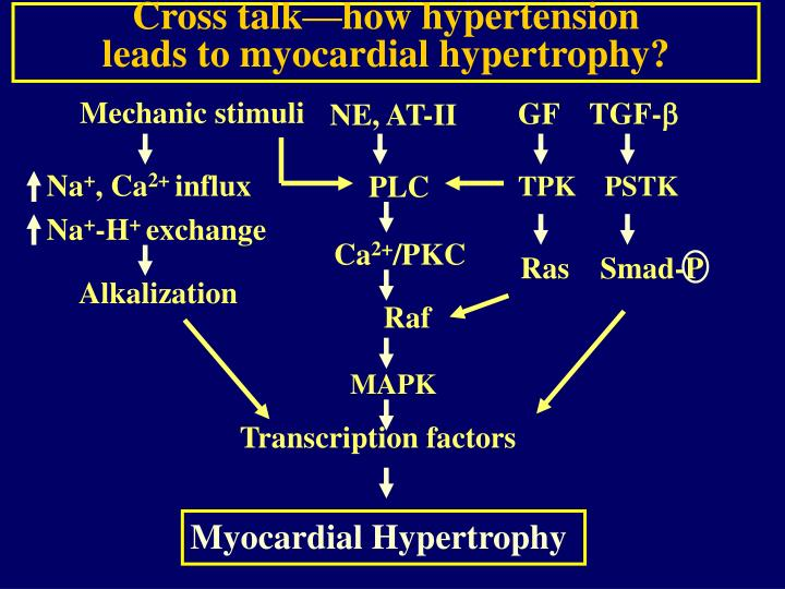 Cross talk—how hypertension