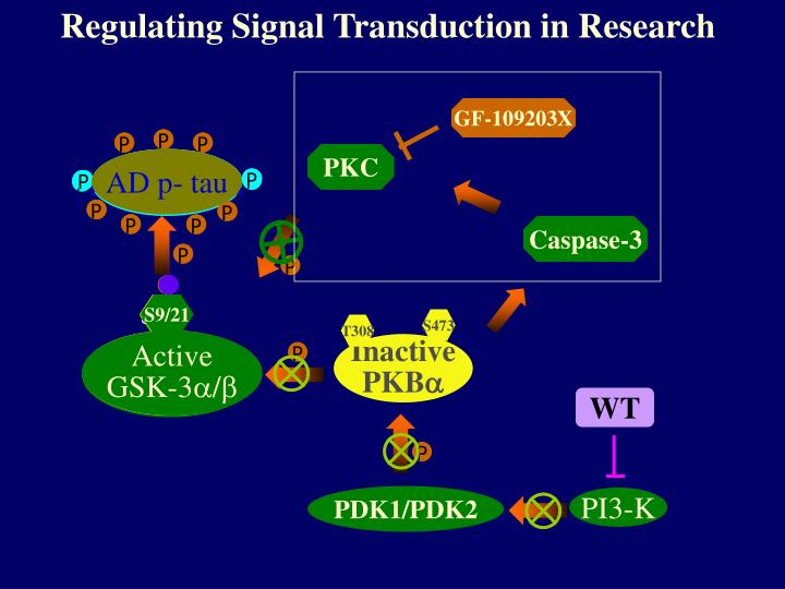 Regulating Signal Transduction in Research