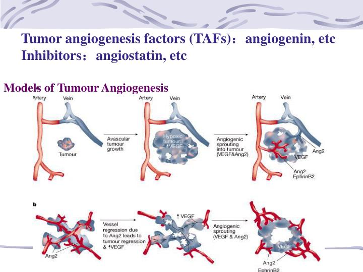Tumor angiogenesis factors (TAFs)