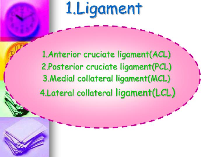 1.Ligament