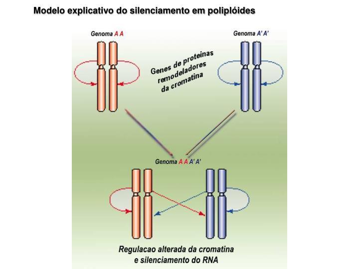 Modelo explicativo do silenciamento em poliplóides