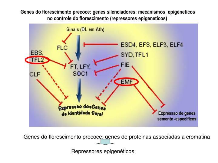 Repressores epigenéticos