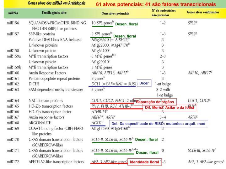 61 alvos potenciais: 41 são fatores transcricionais