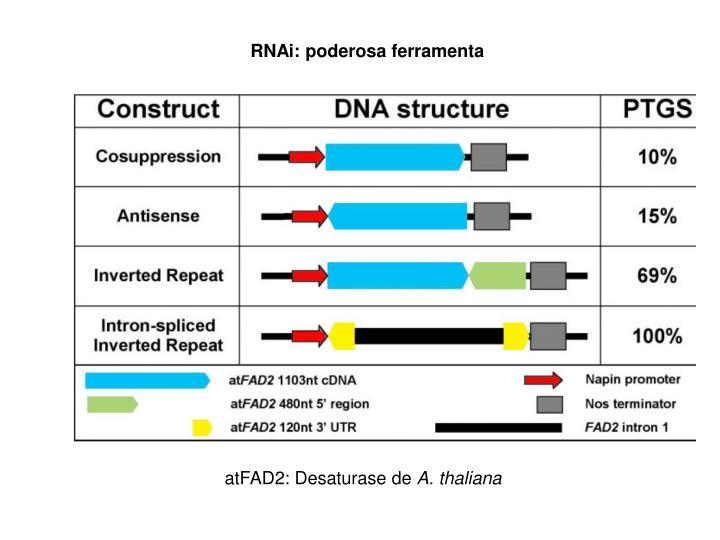 RNAi: poderosa ferramenta