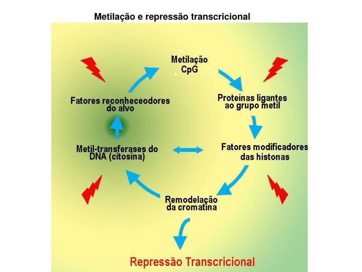 Metilação e repressão transcricional