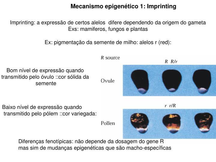 Mecanismo epigenético 1: Imprinting