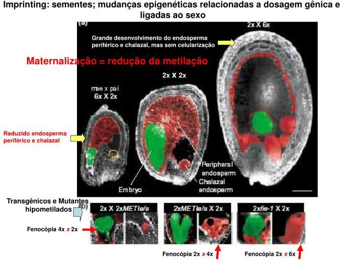 Imprinting: sementes; mudanças epigenéticas relacionadas a dosagem gênica e