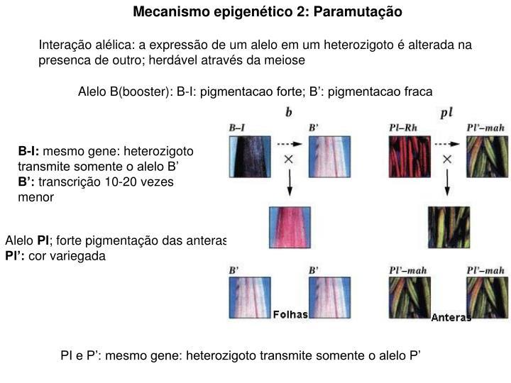Mecanismo epigenético 2: Paramutação