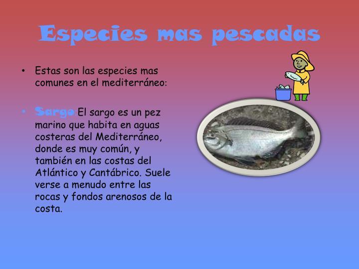Especies mas pescadas