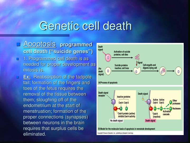 Genetic cell death